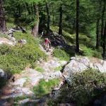 sentiero-tra-i-rododendri