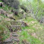 sentiero-a-scalini