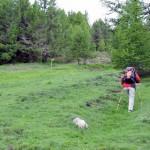 paline al limitare del bosco