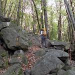 nel bosco iniziale