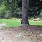 scoiattolo sul percorso