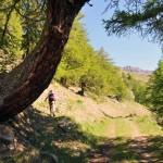 tronco arcuato dove inizia il sentiero
