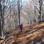 bosco sotto l'alpe spino