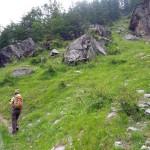 verso il ripido bosco