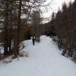 ingresso nel bosco