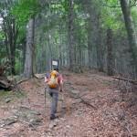 sulla dorsale boschiva
