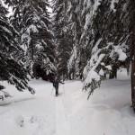 nel bosco ripido