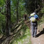 nel bosco di conifere