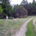 inizio sentiero al margine del bosco