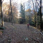 nel bosco sopra onzo