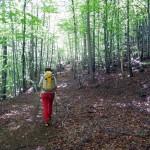 sentiero sopra arbenache