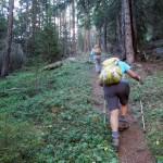 sentiero ripido nel bosco