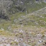 in-fondo-l'alpe-bardoney