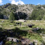paline-al-ponte