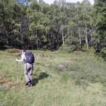 rientro-nel-bosco