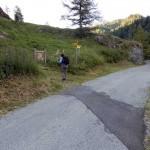 paline-sulla-strada-asfaltata