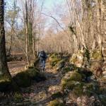 3-entrando-nel-bosco