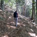 traverso-nel-bosco