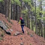 bosco-di-betulle-e-conifere
