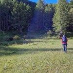 ingresso-nel-bosco